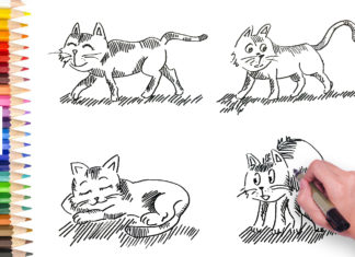 how to draw cat, simple line drawing